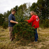 Growing Christmas Trees in Indiana | Indiana Uplands Food Network