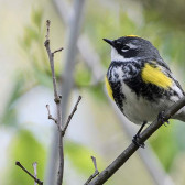 Food for Thought: Conserving Birds and Biodiversity - Research, Education, and Outreach
