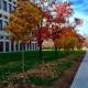 Beautify IUPUI_Fall Leaf Removal 9:00 a.m. - 11:00 a.m.