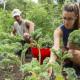 IUPUI Garden Volunteer Hours